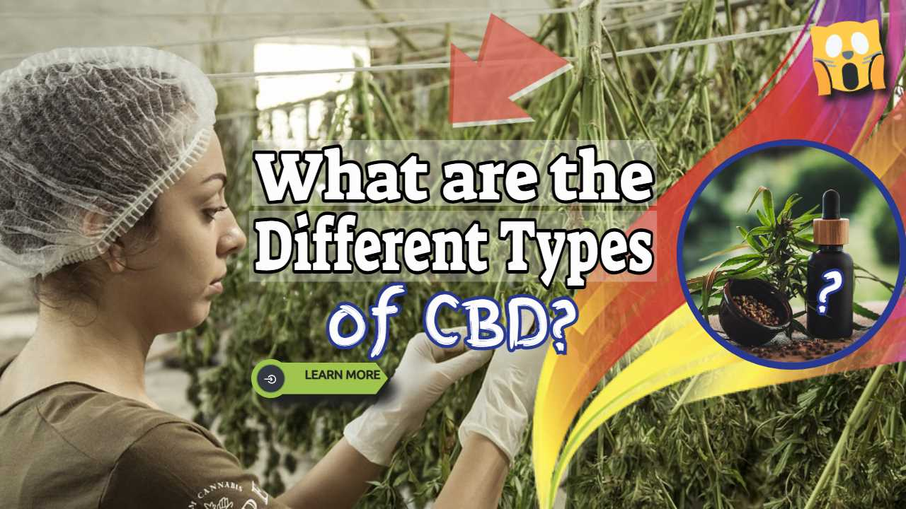 """Image text: """"What are the different types of CBD""""."""
